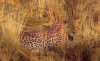 Jak se stát neviditelným? Zvířata umí měnit barvu, předstírat někoho jiného, ale stačí i dobré geny