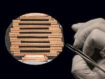 POHLED ZBLÍZKA Dvě stovky řezů kouskem myšího mozku, které jsou tenčí než jedna tisícina lidského vlasu, budou zanedlouho zobrazeny elektronovým mikroskopem. Deset tisíc mikrofotografií uspořádaných n