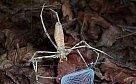Pavouk, který na své oběti hází síť