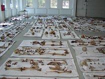 Kosterní pozůstatky jsou po vyjmutí ze země očištěny, prozkoumány antropologem a je odebrán vzorek kosti pro analýzu DNA. Při velkém počtu koster jsou pro dočasné uložení těl používány, tak jako v tom