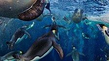 Úniková rychlost tučňáka. EXKLUZIVNĚ PRO NG