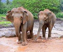 V národních parcích můžete narazit na divoké slony.