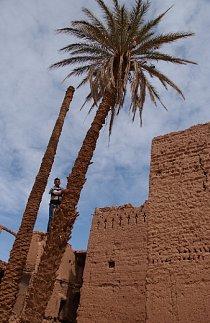 Palma je jedna ze základních potřeb k životu v poušti