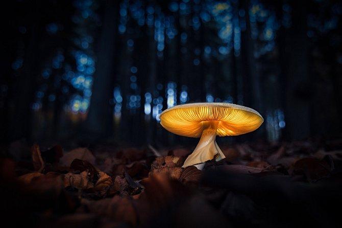 Lesní lampa