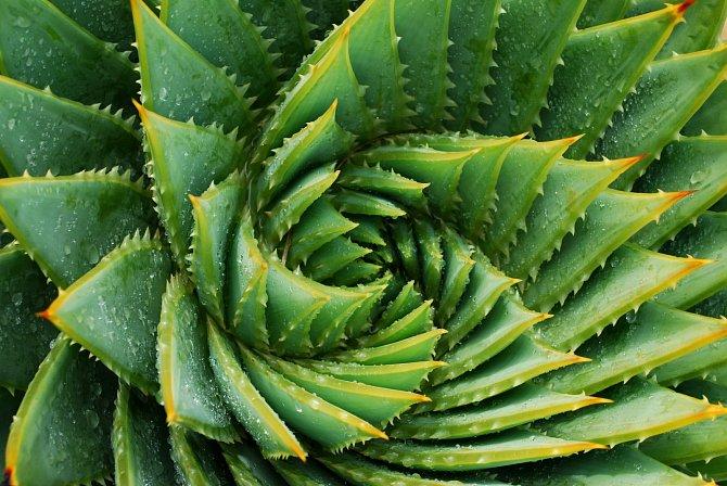 Rostliny jako aloe vera nebo zelenec jsou fantastickým doplňkem do ložnice, protože vám během spánku zlepšují kvalitu vzduchu v místnosti.