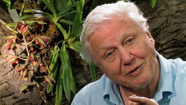 Výprava do království rostlin se Sirem Attenboroughem