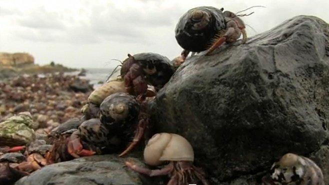 VIDEO: Miliony a miliony krabů zaplavily Panenské ostrovy