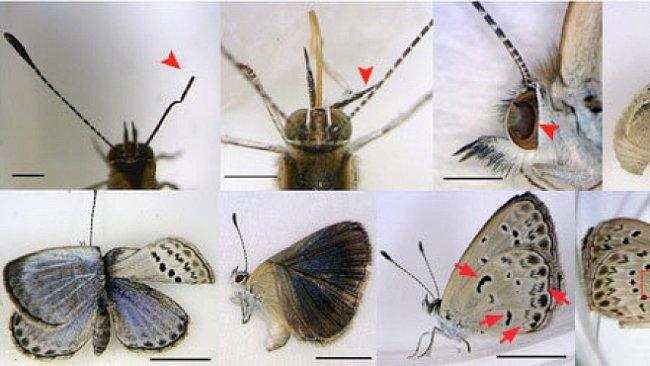 Mutanti z Fukušimy: Začalo to motýly, co přijde dál?