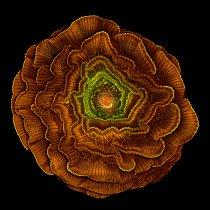 9. místo (Sahar Khodaverdi); semeno rostliny stračky