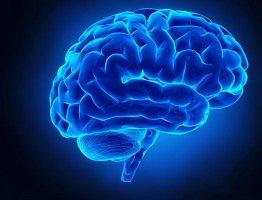 Co víte o mozku?