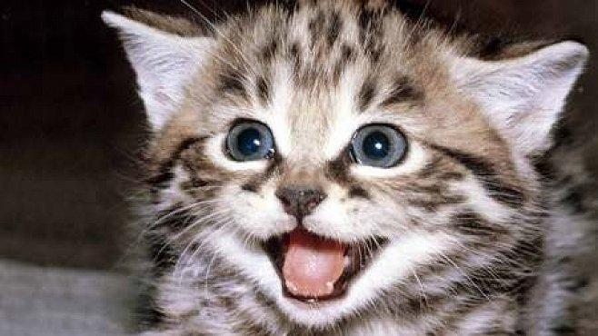 Kočky jsou stejnou obětí diskriminace jako lidé, zjistila studie