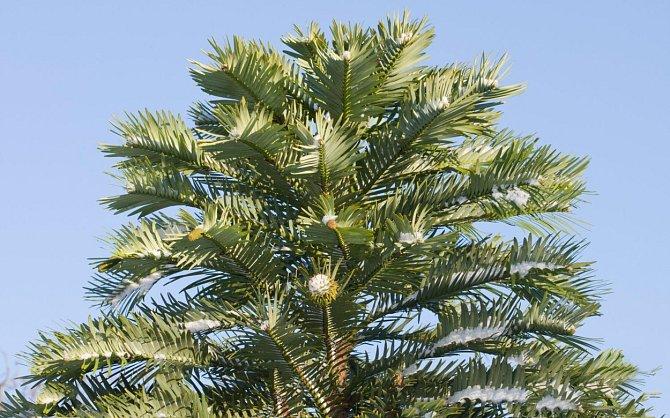 Nyní je důležité zajistit rostlinám nadále nerušený vývoj.
