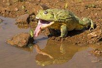 Nejkrásnější žáby světa