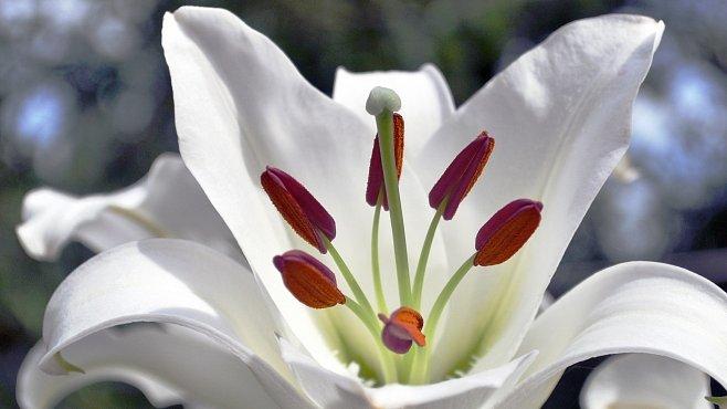 Rarity mezi rostlinami: 10 druhů, které ke kvetení potřebují tmavou noc