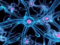Nervová buňka