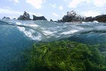 Fotografie zachycuje skály porostlé mořskými řasami (Caulerpa racemosa), St. Peter a St. Paul's rocks, Brazílie.