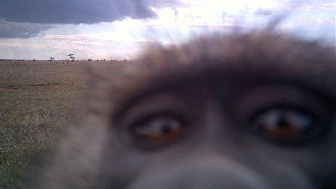 OBRAZEM: Divočina v Keni pěkně zblízka. I s otisky zubů na kameře