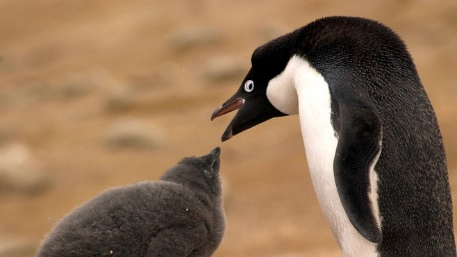 Flora a fauna Antarktidy – co zde roste, plave či létá