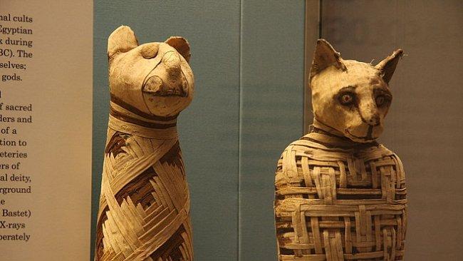 Zvířecí mumie slouží i doprovázejí
