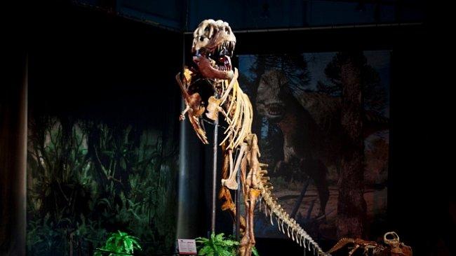 Dinosaurium představí pravé kostry dinosaurů v hodnotě desítek milionů korun