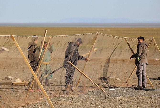 Na odchyt sajg se stavěly osmdesát metrů dlouhé sítě.