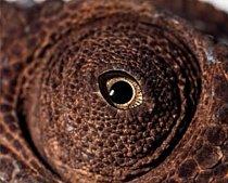 14. Čí jsou to oči? a) kakadu žlutočečelatý b) kapr obecný c) chameleon pardálí