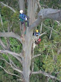 Výzkumy stromů probíhají v terénu.