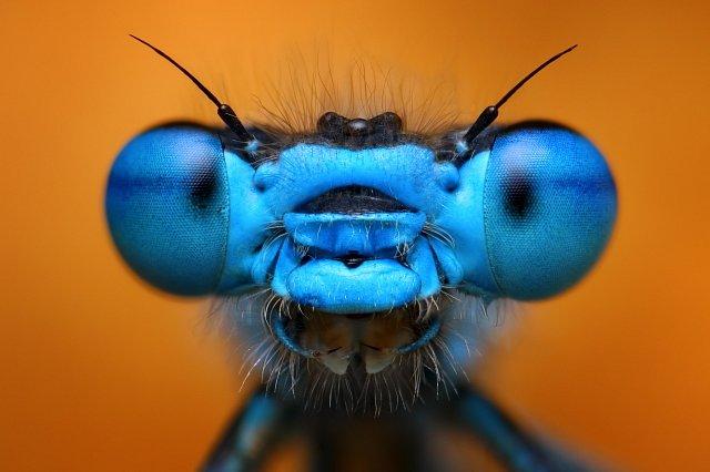 Ani vážka, ani motýl...