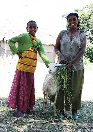 Paní Betula plánuje vbudoucnu prodávat jehňata na trhu a našetřit si na krávu.
