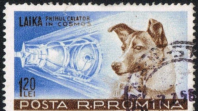 Zvířata ve vesmíru: Psi, opice i octomilky většinou zaplatili vlastním životem