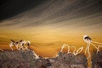 Buvoli zanechávají v bahně kráterového jezera Queen Elizabeth stopy. FOTO: Joel Sartorie