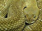 BBC: Mezi největšími hady na světě