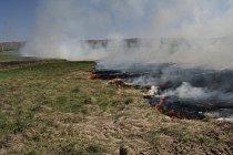 Řízené požáry jsou jedním ze způsobů, jak se pečuje o pestrost druhů v krajině.