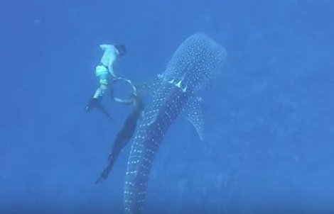 ...než žraloka z lana vysvobodil.