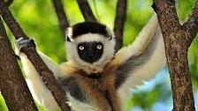 OBRAZEM: Ostrov lemurů s fantazijní přírodou. To je divoký Madagaskar