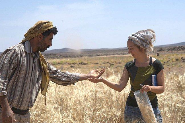 Ali Shakaiteer a vedoucí týmu Amaia Arranz-Otaegui sbírají pšenici pro další zkoumání.