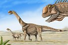 Camarasaurus Supremus byl přímý předek, nebo dvakrát použitý evoluční vzor?
