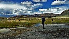 V Mongolsku žijí asi 3 miliony lidí, přičemž zhruba polovina v hlavním městě Ulánbátar. Na nekonečných stepích tak narazíte spíš než na člověka na zvíře. Podle některých odhadů se na mongolských pastvinách pase na 40 milionů kusů dobytka.