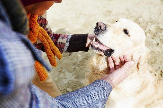 Psi štěkají a vrčí z nejrůznějších důvodů. My však máme velkou šanci zjistit, co se děje.