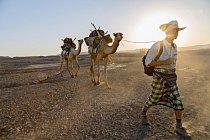 Novinář Salopek jde stejnou cestou jakonejranější cestovatelé, když vede velbloudy přes Afarskou poušť vEtiopii.