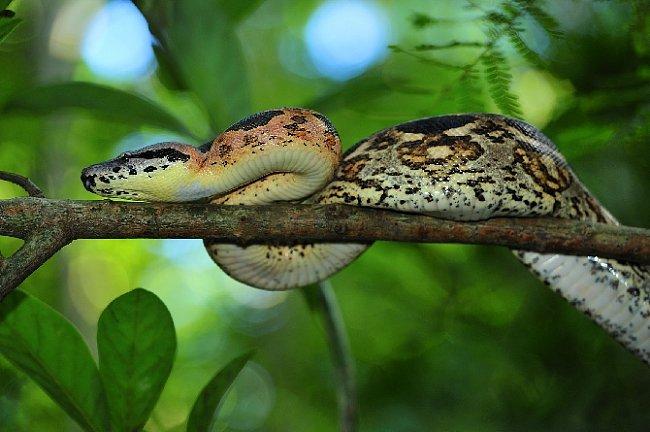 Potkáte i hady