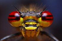 Larvy motýlic mají na konci zadečku tři výrůstky, které jim pomáhají s plaváním.