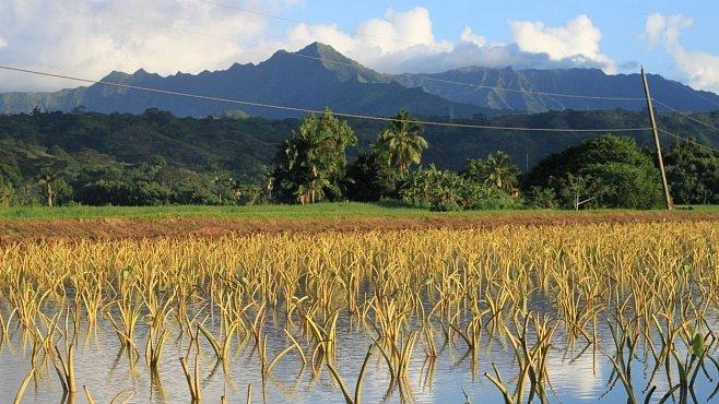Střípky z ráje: Touha po jitrnicích na Havaji