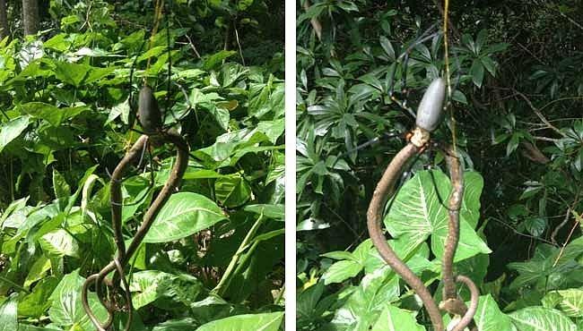 VIDEO: Pavouk sežral hada. Austrálie je divná země...