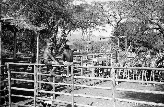 """Navštívíte nejkrásnější národní parky, kde budete pozorovat nejvzácnější zvířata Afriky, od malých kopytníků přes kočkovité šelmy a nosorožce až po slony. A dozvíte se také spoustu veselých a zajímavých příhod, které zde """"Joe"""" prožíval."""