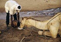 Súdánský zápas o vodu
