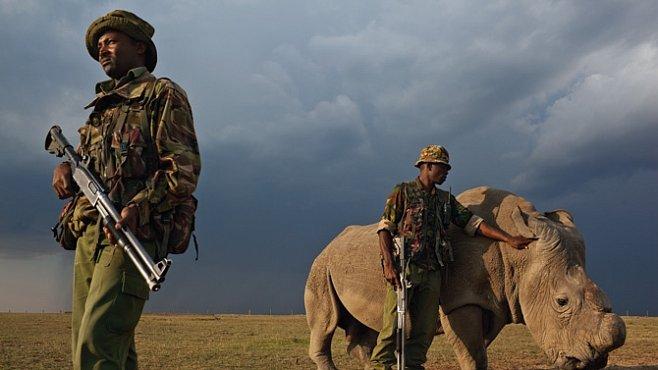Exkluzivně pro National Geographic: Válka o nosorožce