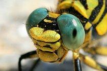 Hmyz pod lupou