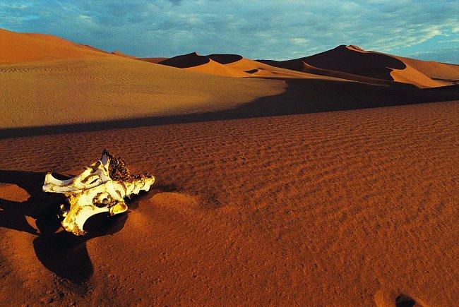 Kosti uhynulých zvířat nejsou v pouštích výjimkou.