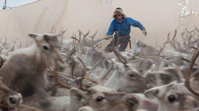 Exkluzivně pro National Geographic: Sámové - ti, kteří tančí se soby